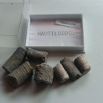 Nautiloids Fossil specimens x7  in case approx 1.5 inches    LC-22